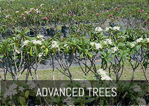 Advanced Trees